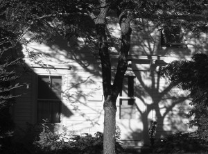 From the series, In Light of Shadows, Laura Harden